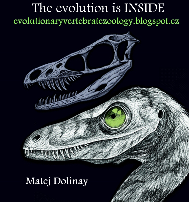 Evolutionary Vertebrate Zoology